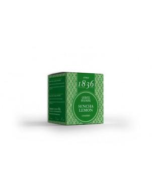 Sencha Lemon Green Tea Pyramid